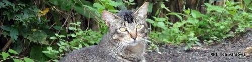 Einer unserer freundlichen Bauernhof Katzen.
