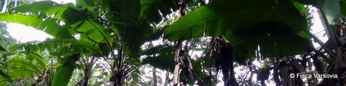 Unsere Bananenplantage.